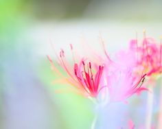 """500px / Photo """"Pastel in early autumn"""" by Kaz Watanabe"""