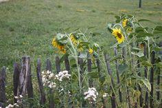 Rund um das Nationalparkhaus in Hardegg (Nationalpark Thayatal) gibt es allerhand zu entdecken! Plants, National Forest, Round Round, Summer Recipes, Lawn And Garden, Nice Asses, Plant, Planting, Planets
