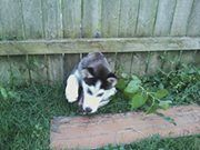 Tips to Keep Your Dog Securely in Your Yard #Pet #Dog #Illinois #PetSafety