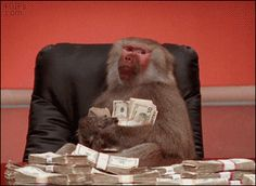Upvote the money baboon and you will find money. - GIF on Imgur