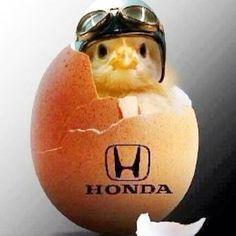 Honda chic !!