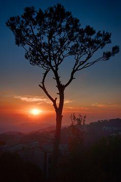 sunset tree sky beautiful