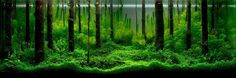 Aquascaping Inspiration