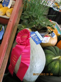 Our award winning Blue Hubbard Squash at the Benton Franklin County Fair 2013