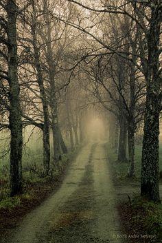 A foggy day in Røyken