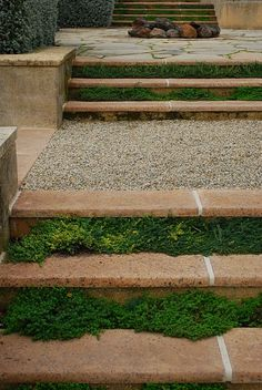 Thyme Stairway. You can do this with any herbs. In our old house we had to go up some steps to get to one level and we grew our herbs in the stairs. But only the low growing tight clumping ones.