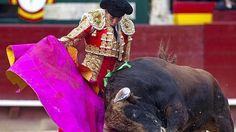 Notiferias Toros en Venezuela y el Mundo: Jiménez Fortes: «El torero ha hecho tirar para del...