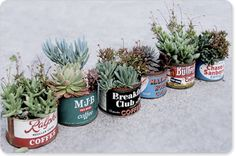 potted succulents in old coffee cans