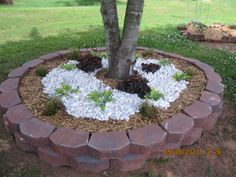 FLOWER GARDEN, BILT AROUND TREE