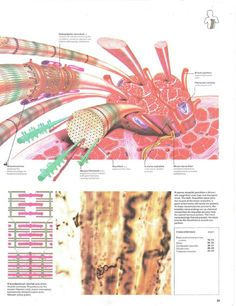 Atlas of the Body Anatomy, Map, Location Map, Maps, Artistic Anatomy