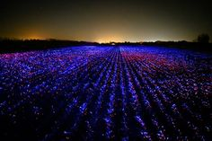 Daan Roosegaarde's Grow installation combines lighting and agriculture. Importance Of Agriculture, Farming Techniques, Blue Led Lights, Colossal Art, Davos, Dutch Artists, Plant Growth, Light Installation, Mood