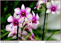 Orquídeas | by M. Martin Vicente