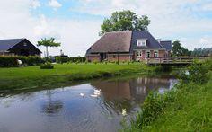 In de Surhuizumer mieden. Friesland. The Netherlands