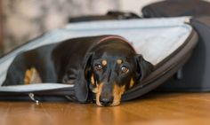 Whether your dogs travel or stay at home, pack these items for them