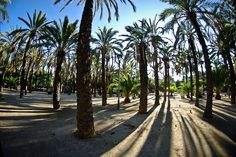 #Barcelona #park #walk #picnic #greenery #Bonavista #trees #palmtrees #benches #visits #JoanMiro