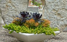 Sedum and Succulent Planters