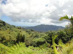 - El Yunque - Photo of El Yunque Rainforest Half-Day Trip from San Juan by Viator user Brooks W National Park Tours, National Parks, Living In Puerto Rico, Carnival Glory, El Yunque Rainforest, Us Park, Visit Colorado, Tour Tickets, Beautiful Waterfalls