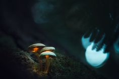 Ever wanted to learn how to create those glowing mushroom photos? Try this tutorial by landscape and nature photographer Daniel Laan.