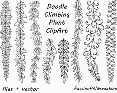 Doodle Climbing Plant ClipArt, Hand Drawn Herbs Clipart, Leaves clip art, Herbs Silhouette, PNG, Vector, For Personal and Commercial Use