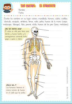 Actividad para imprimir de los #huesos, el #esqueleto: cráneo, costillas, húmero, cúbito, mandíbula, cadera, vértebras, fémur, tibia, peroné, ... by Eva Barceló Marqués @evacreando #science #kids #Spanish