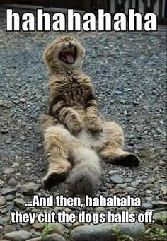 Funny cat photos to make your day better. These adorable cats are sure to bring a smile to you. You will feel all the cat love and cat fun you can get! funny cats are never going to be bad I Love Cats, Crazy Cats, Cool Cats, Animals And Pets, Funny Animals, Cute Animals, Photo Chat, Tier Fotos, Funny Animal Pictures