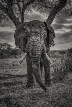 African Safari - 34 Photos that will make you want to visit Tanzania