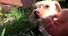 Они думали, что спасли маму и трех щенков. Но их ждал большой сюрприз!