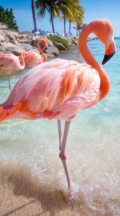 Gorgeous pink flamingos, always stunning bird photography here! Flamingo Wallpaper, Flamingo Art, Pink Flamingos, Flamingo Photo, Flamingo Beach, Pretty Birds, Beautiful Birds, Animals Beautiful, Pretty Animals