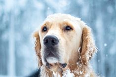237 Likes, 45 Comments - living with paws Instagram Feed, Winter Wonderland, Dogs, Animals, Acre, Life, Animales, Animaux, Pet Dogs