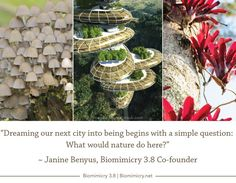 Biomimicry = Return on Inspiration – GreenMoney Journal