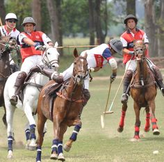 Polo en argentina . History Of Argentina, Polo Horse, Polo Match, Sport Of Kings, English Riding, Marco Polo, Polo Club, South America Travel, English Style