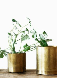 Brass vases with minimal leafy greenery///