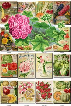 SEEDS-14 Catalogs Covers Collection with 92 vintage images in High resolution old digital download printable Geranium Cucumber Corn Begonia           data-share-from=listing        >           <span class=etsy-icon