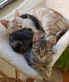 Cats will wrap their tails around you or another cat to show friendship. It is a sign of affection a... - Mom.me