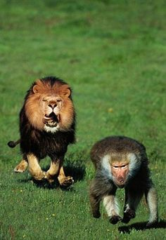 Oh shit this is not looking good baboon