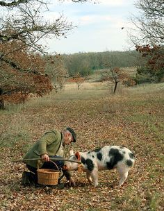 Truffle-hunting pig - Because black truffles grow a few inches underground,  that  makes them hard to detect. Truffle hunters use either dogs or pigs to find these elusive spores.