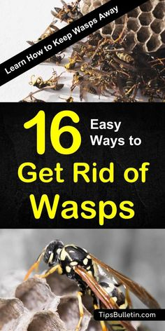 Learn how to keep wasps away with 16 tips and recipes to get rid of wasp nests naturally. Using traps, recipes, and plants to repel and kill wasps. Ideal for natural pest control around house and garden. Diy Pest Control, Bug Control, Weed Control, Bees And Wasps, Permaculture, Killing Wasps, Getting Rid Of Bees, Get Rid Of Wasps, Gardens