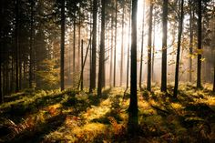 Fall Forest with Sunrays - Wall Mural & Photo Wallpaper - Photowall