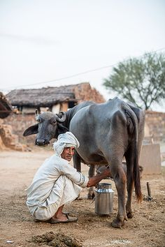 Scenes from India: North - north-india-alwar-region-agriculture -