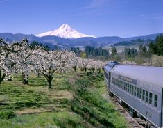 The Mount Hood Railroad Offers Some Of The Most Breathtaking Views In Oregon Great Places To Travel, Best Places To Vacation, Best Places To Live, Vacation Trips, Places To Visit, Travel Things, Vacation Travel, Travel Stuff, Vacation Spots