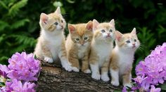 Too cute little cats