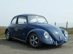 cal-look beetle