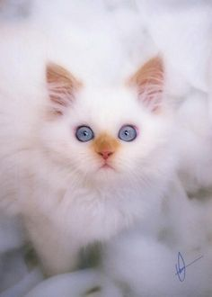A so sweet young little cute Cat !!!!