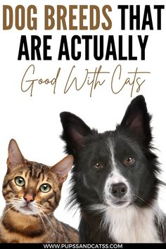 """If you like cats and dogs, you don't have to choose just one pet. Although getting along """"like cat and dog"""" is an expression used for irreconcilable couples, both animals can develop a peaceful and harmonious relationship. Living With Dogs, What Dogs, Dog Facts, Dog Training Tips, New Puppy, Dog Owners, Cool Cats, Rescue Dogs, Dog Love"""