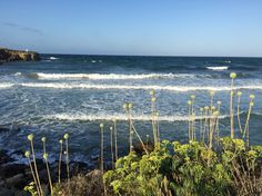 Bini gaus Menorca, Santa Monica, Mountains, Beach, Water, Travel, Outdoor, Gripe Water, Outdoors