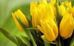 Yellow Flowers HD wallpaper | 2560x1600 | #23763