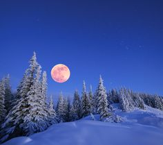 February Full Moon Reflections - Sacred Earth Rhythms - The February Full Moon is upon us, fully illuminating the barren landscape we inhabit in the Northern Hemisphere, and shining a light on the parts of ourselves that require cleansing, tending, prep...