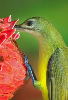 Wow.....Amazing shot of a hummingbird....<3