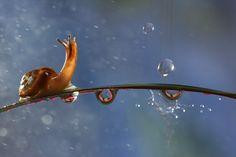 snail in the rain---Vadim Trunov's photo