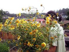 [오래된 집 복원기] #33 시골집을 내 손으로 고치는 재미 : 네이버 블로그 Pumpkin, Plants, Outdoor, Outdoors, Pumpkins, Plant, Outdoor Games, Squash, The Great Outdoors